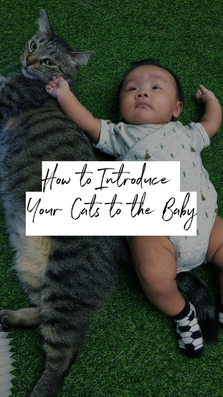 How To Introduce Your Cats To The Baby